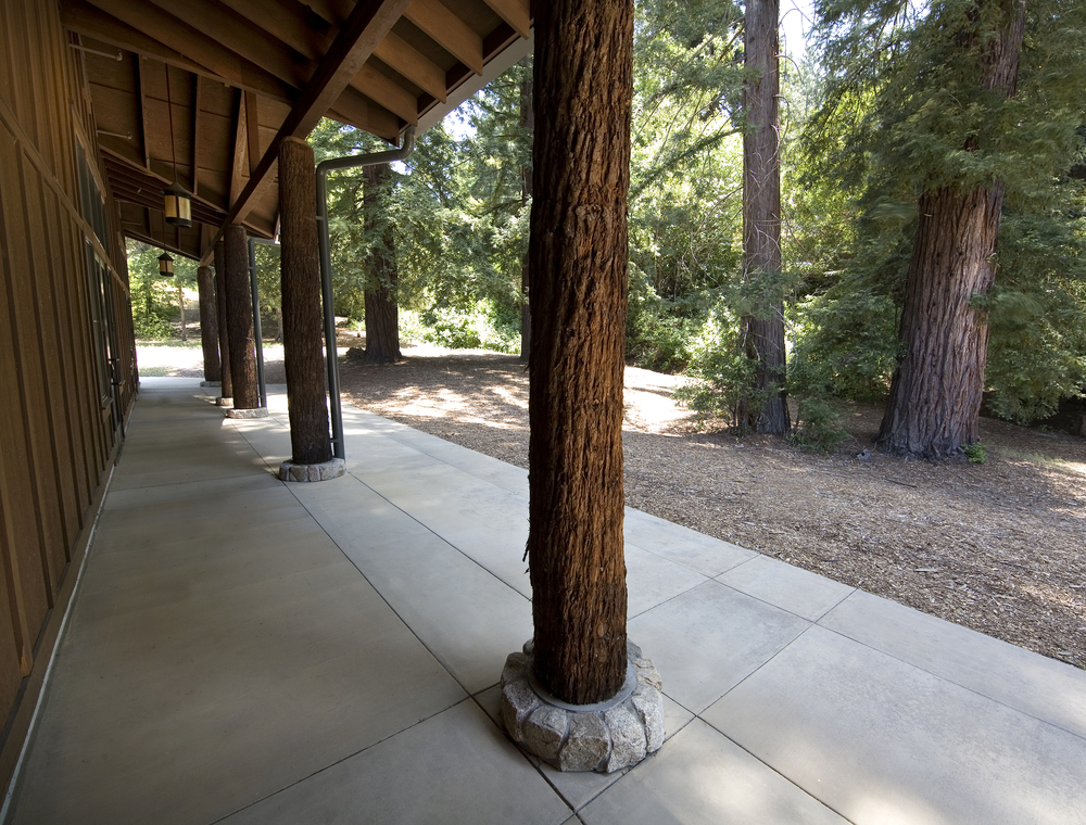 mcafee_fieldhouse_mount_hermon_tree_trunk_detail