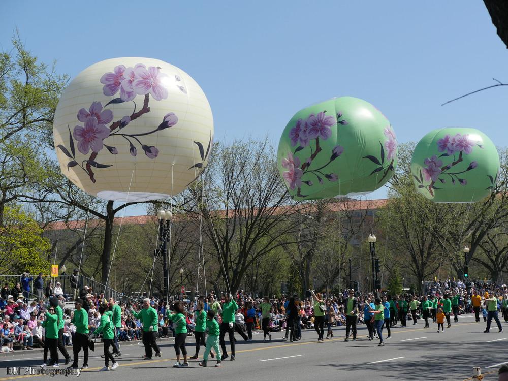 national_cherry_blossom_festival_2015_parade_20.jpg