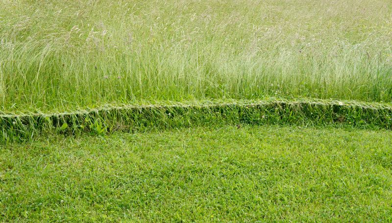 grassbraiding3.jpg