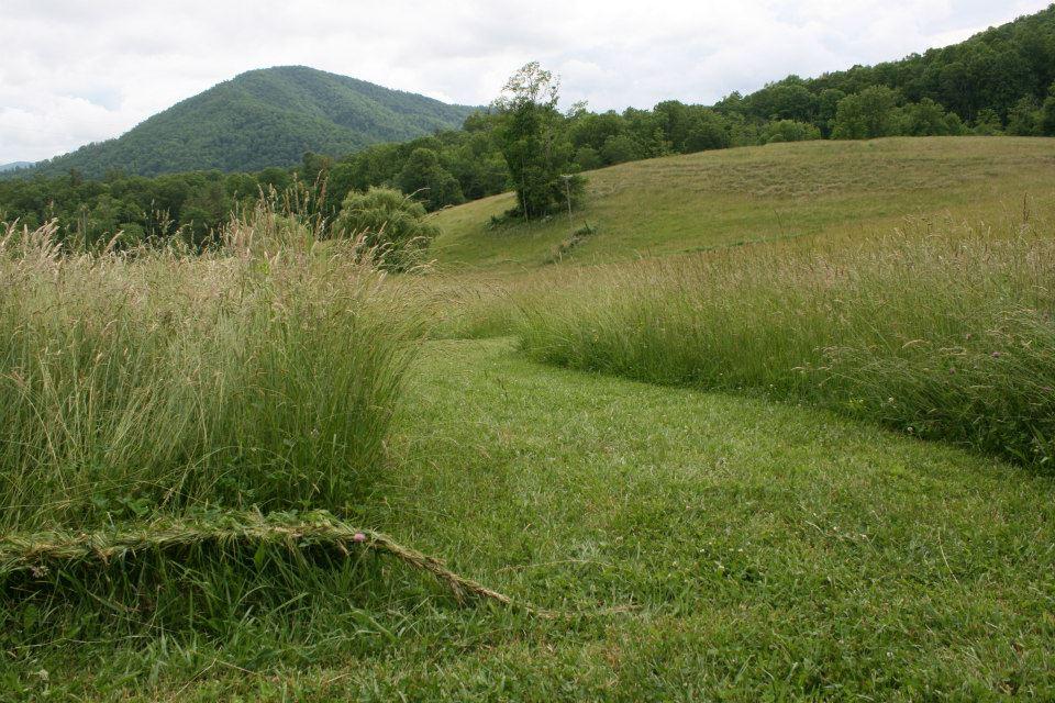 grassbraiding7.jpg