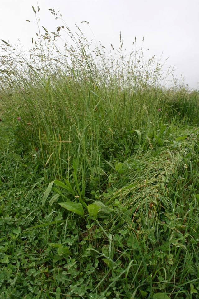 grassbraiding10.jpg