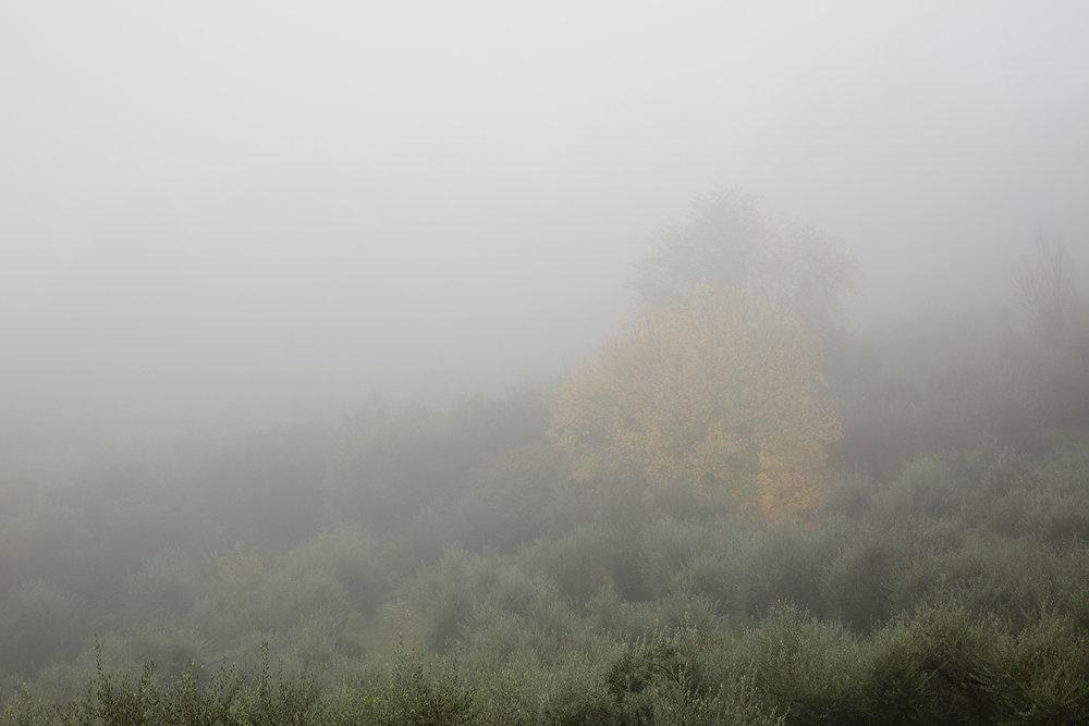 foggy florence 1