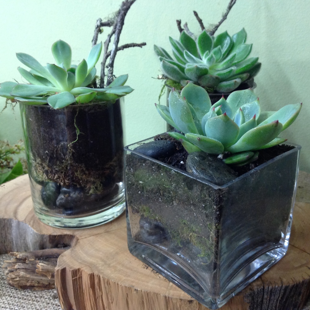 75. Succulents in Modern Cube Vase