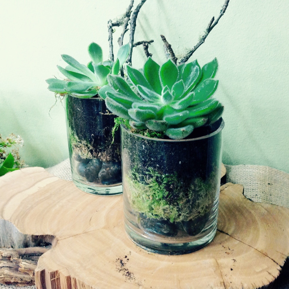 74. Succulents in Modern Cylinder