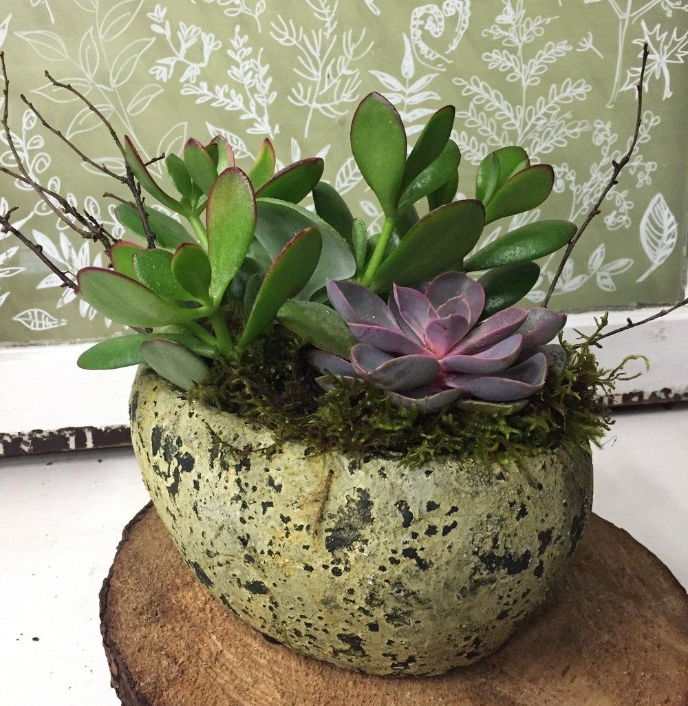 71. Petite Potted Succulents