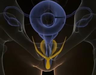 clitoris1