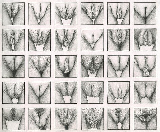 vulvas1.jpg