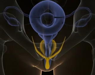 clitoris women sex 3D | Dr. Jason Winters | Sex Therapy Vancouver | Squarespace Blogging