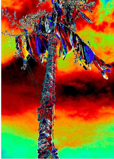 """SUN DANCE TREE""    by White Thunder Images"