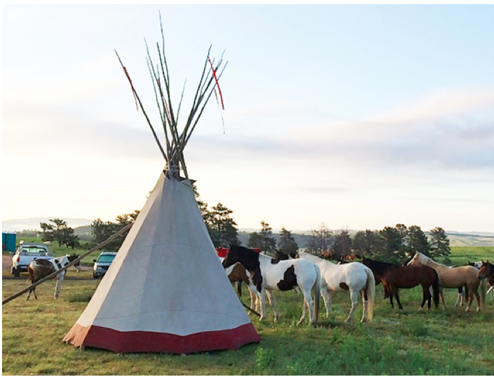 WILD HORSES    having breakfast just outside my neighbor's tipi early on second morning.