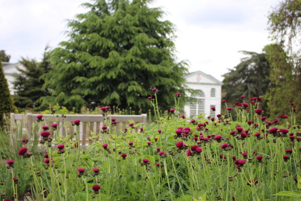 Kew XXV.JPG