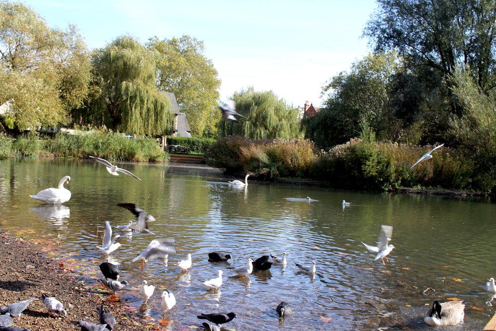 Best London Neighbourhoods: Barnes and Barnes Pond