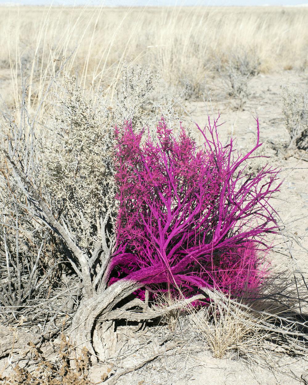 Pink_Desert.jpg