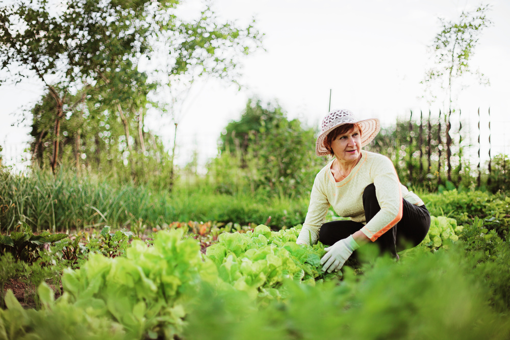 gardening essays Gardening as a relaxing hobby essay gardening is a hobby that i am quite interested in this hobby is important to me as i am trying to go organic and help the.