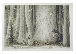 Douglas Fir and Cedar Trees