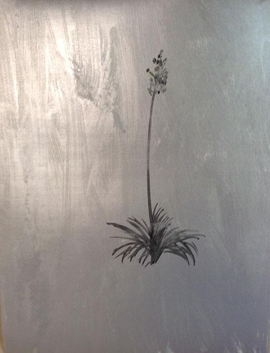GONZALO-MARTIN-CALERO-new_mexico_desert_flowers-paintings-029.jpg