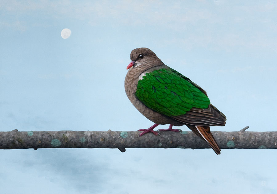 Emerald Dove and The Moon