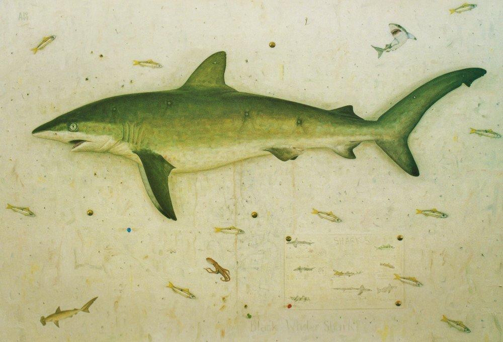 Black Whaler Shark