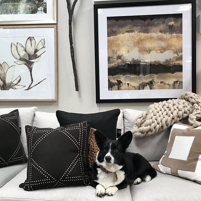 Daisy making herself at home on the stunning Hudson sofa by @molmic_sofas whilst also enjoying the luxury of the ever gorgeous @bhdaus cushions. @lagrolla artworks looking the goods as always x  #interiordesign #australiandesign #interiorstyle