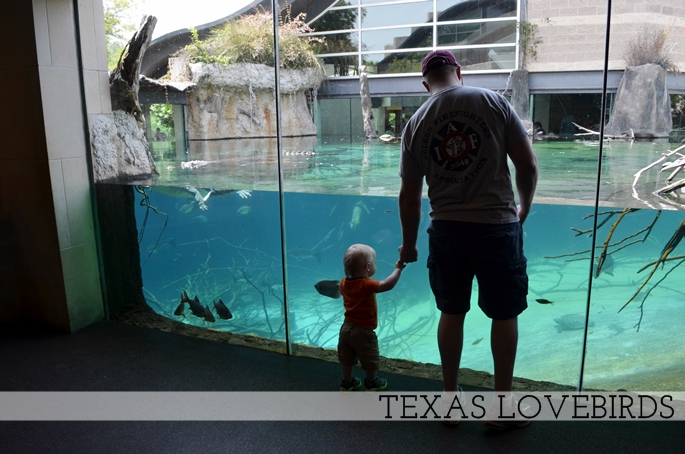 Fort Worth Zoo Aquarium