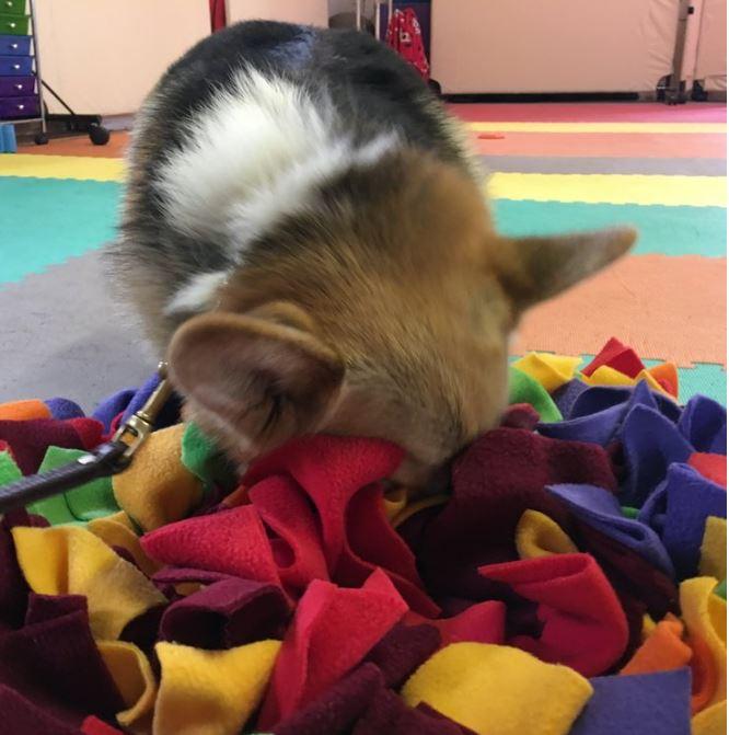 Michele's snuffle mats