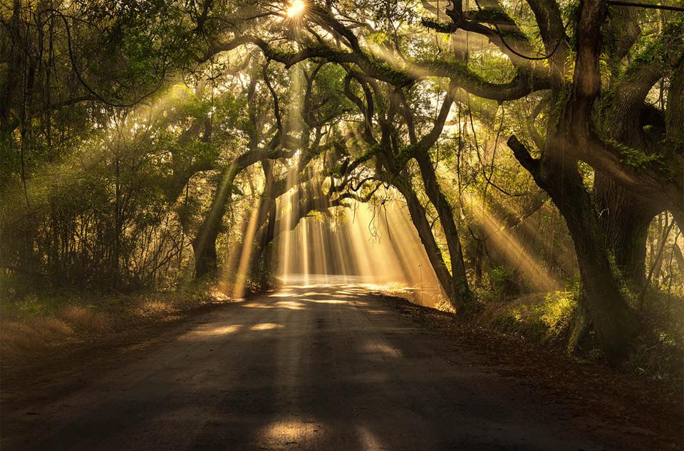 sun-rays-shining-through-trees.jpg