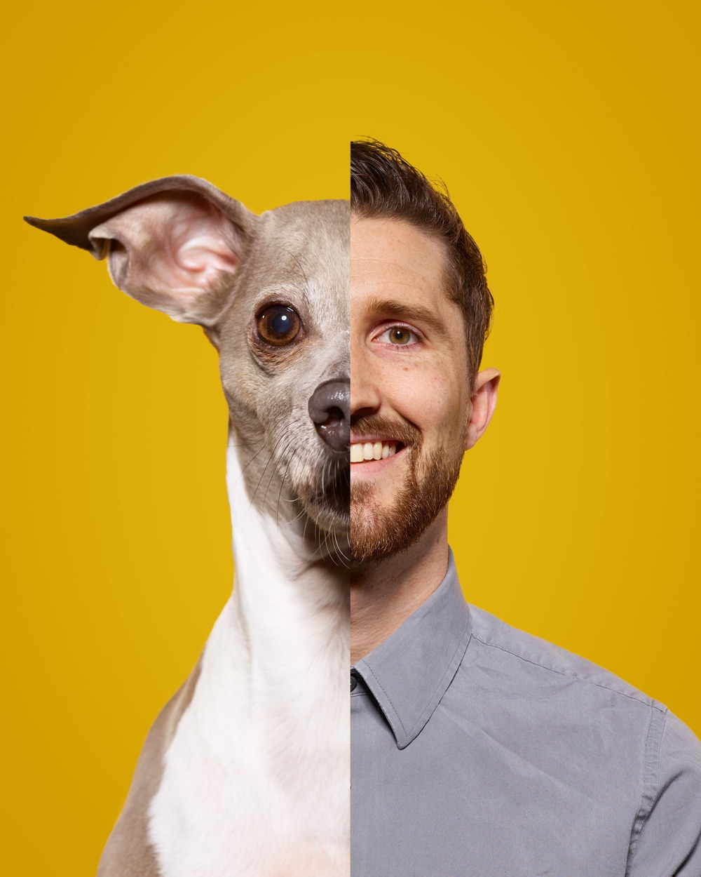 Brandon Todd : Art Director Brandon is a Kansas City native. As an Art Director specializing in design and animation, Brandon bends pixels to his will. When he goes home, he surrenders that will to his two little girls. Mulva is an Italian Greyhound and he claims there is a language barrier between them.