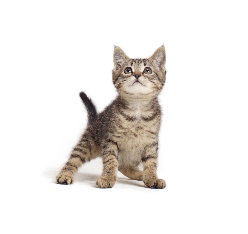 53450_Pets2013_CouponCAT1-1263.jpg