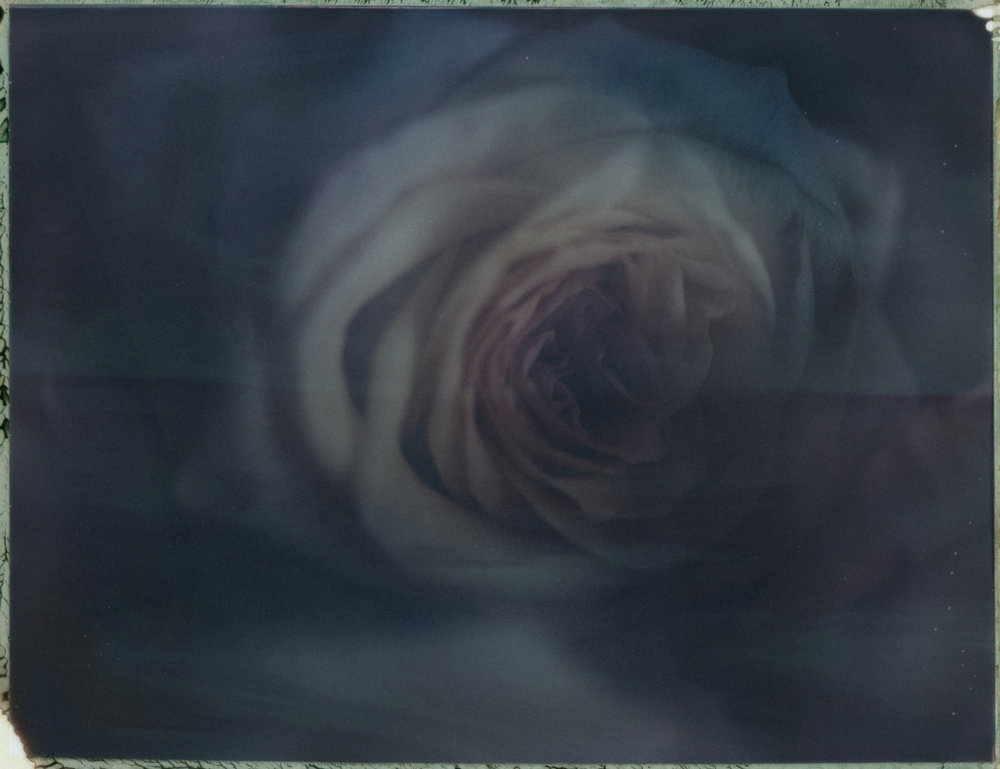 FLOWERS-003_B.jpg