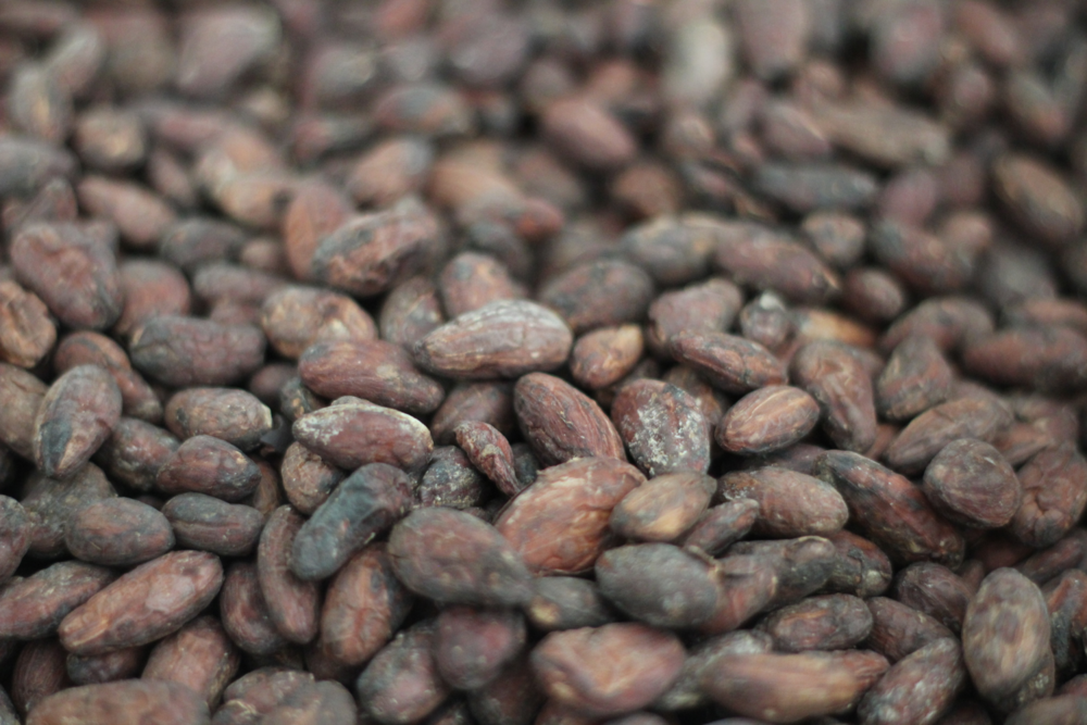 beautiful cacao beans