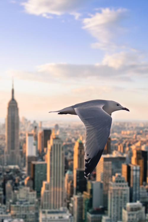 Because the heights you seek to reach may seem too far from where you are right now, but you have to keep your sights set ahead of you and keep flying higher. No distractions from your destination. xo -A