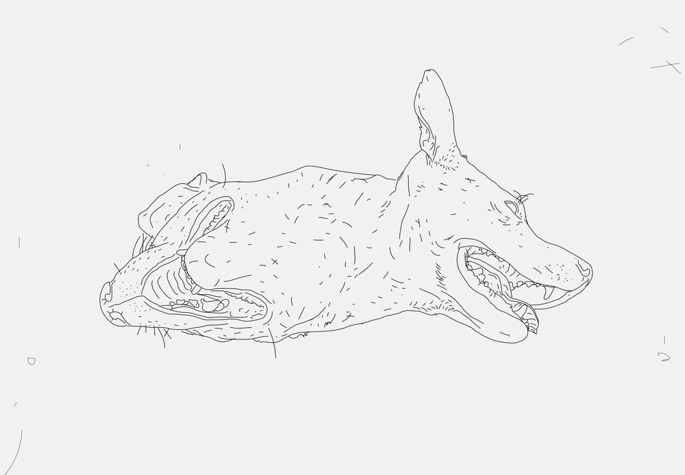 illustrasjonhund.jpg
