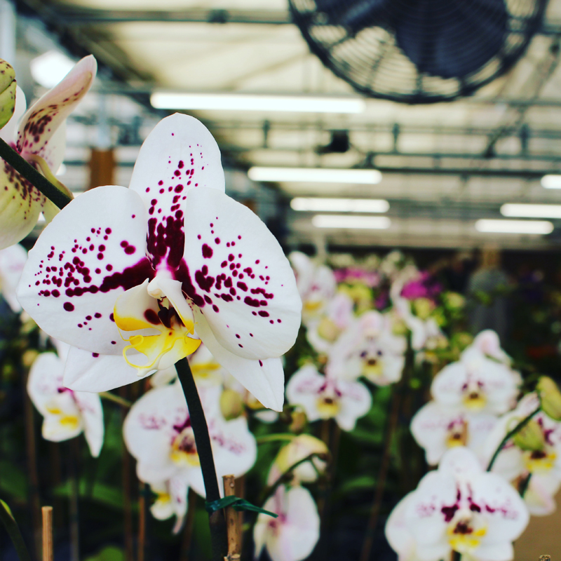 Atlantic Avenue Orchid U0026 Garden Center
