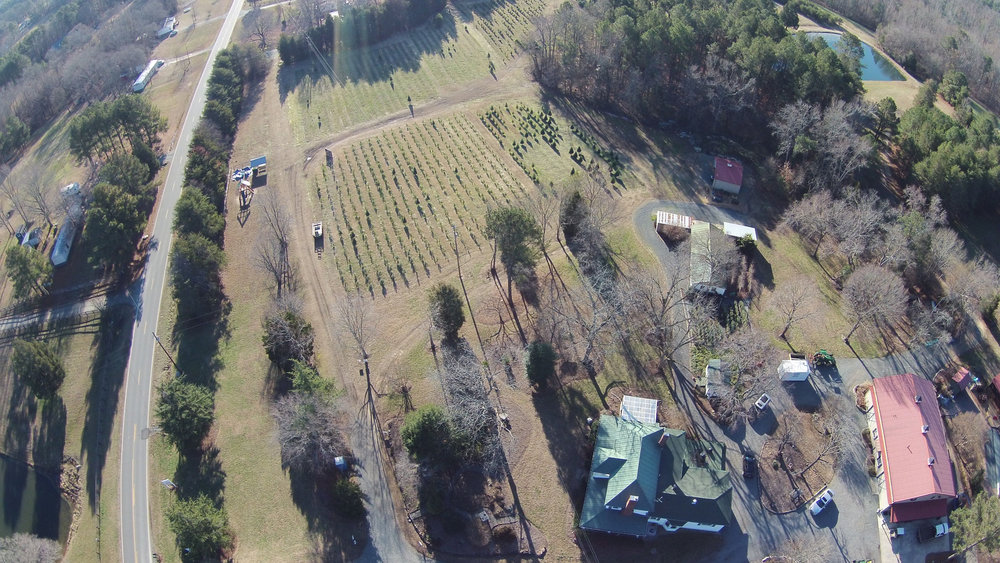 photos courtesy of jordan lake christmas tree farm.