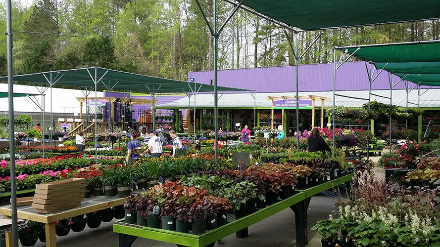 Perennials Department Spring-web.jpg