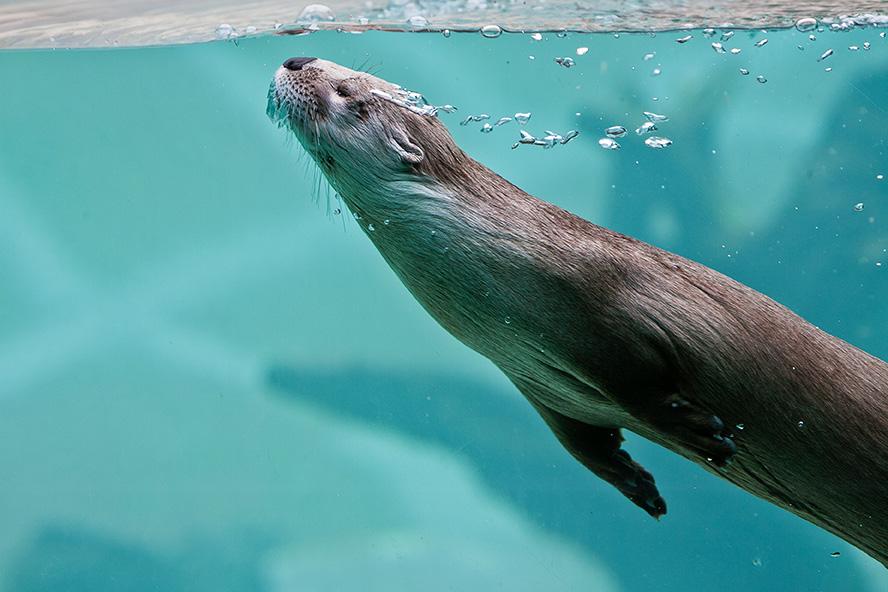 Otter6-web.jpg