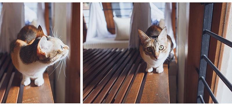 Chennai Cats