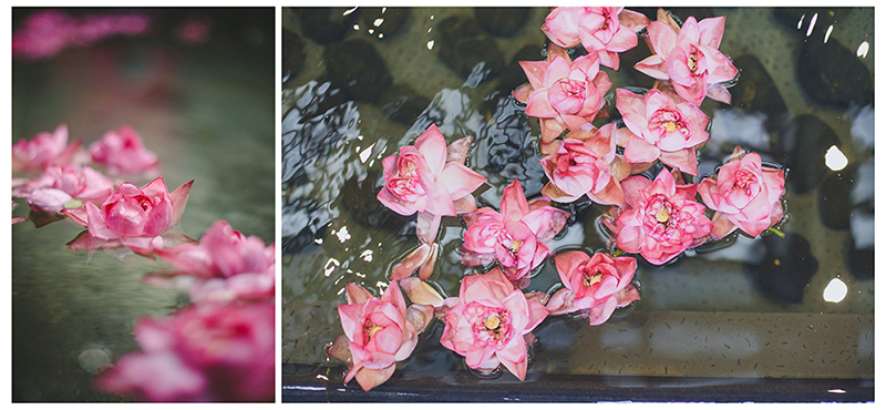 chennai lotus