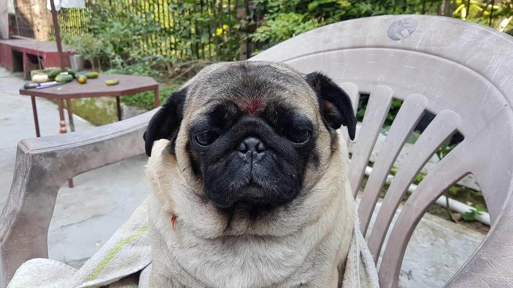 spiritual tours india - Rishikesh - pug.jpg