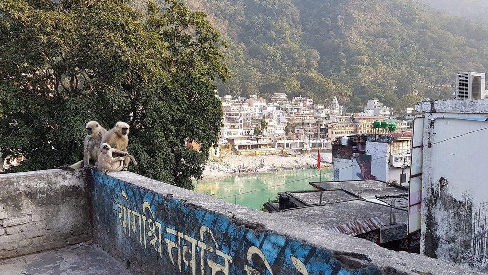spiritual tours india - Rishikesh - monkeys.jpg