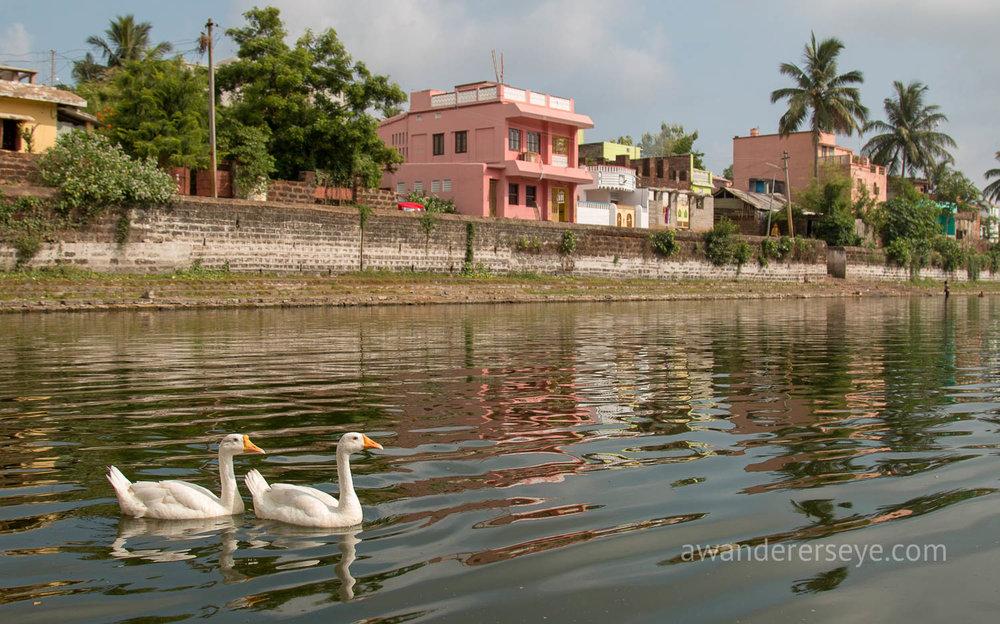 A neighborhood pond in Odisha.