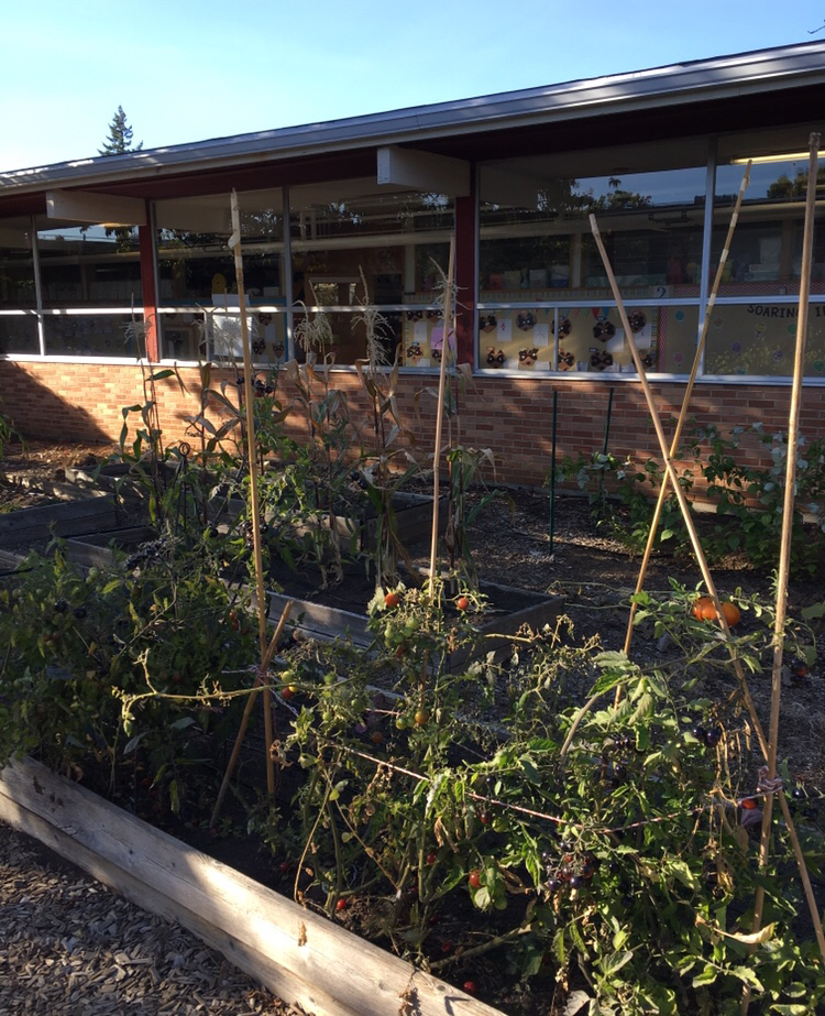 One of the school gardens that IRCO uses to provide fresh foods to the Food Pantries.