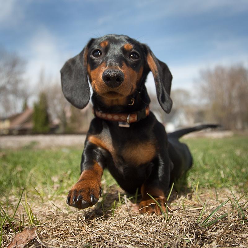 puppyphotograph.jpg