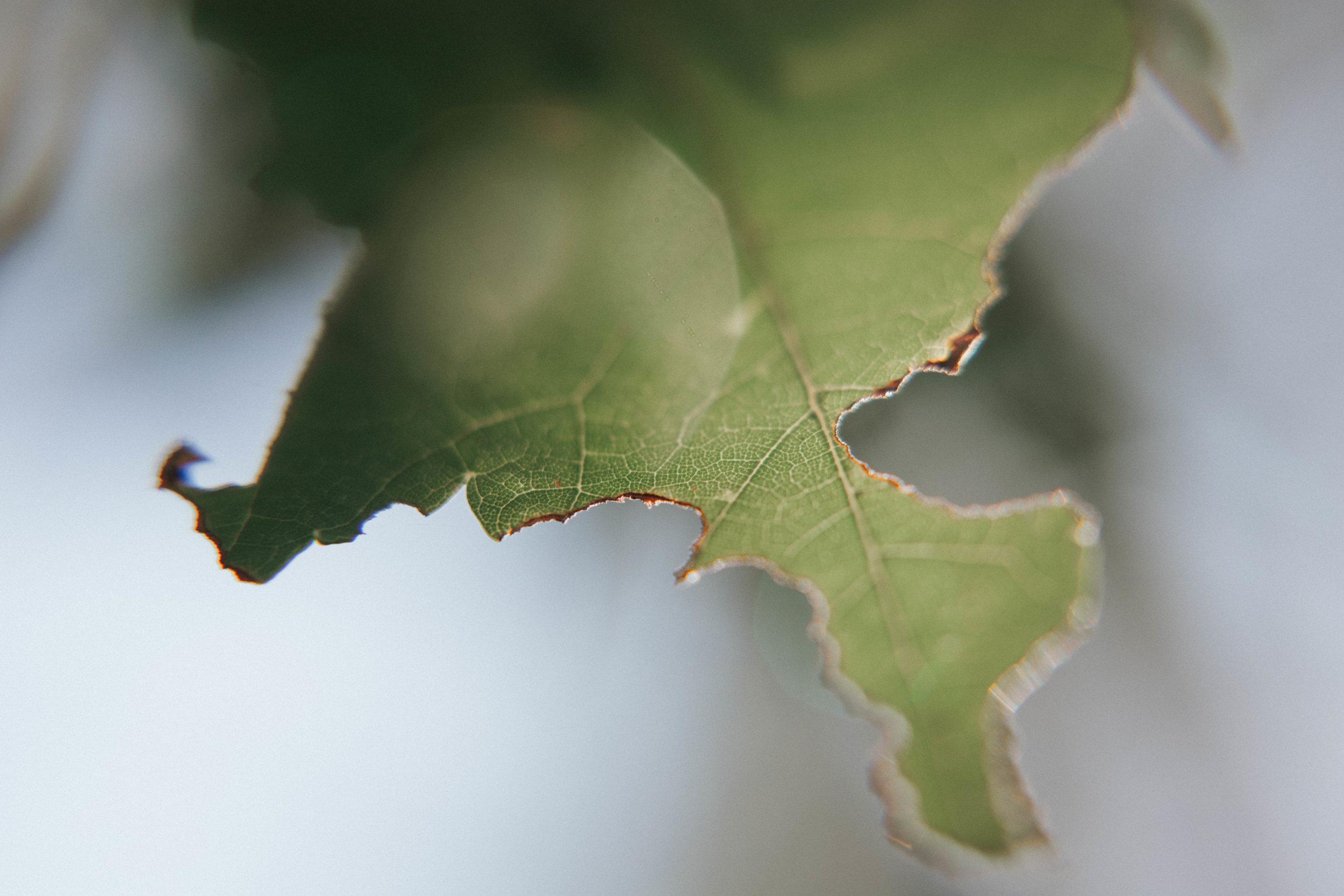 20 macro lens filter review