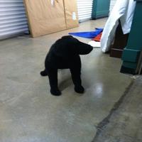 0069: Large Stuffed Animal (Dog)