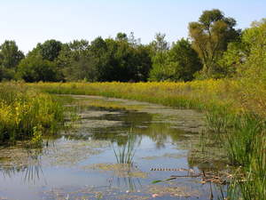 Wetland After Cattail Removal - Community Service