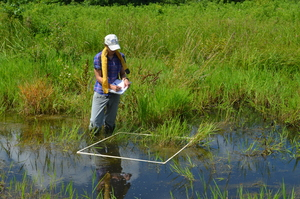 Wetland Monitoring - MAD Scientist