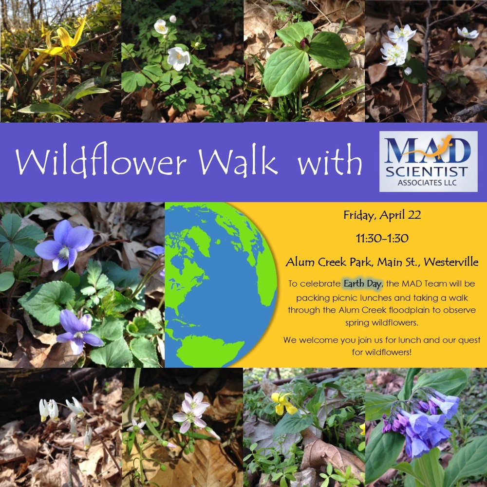 WILDFLOWER WALK - MAD SCIENTIST ASSOC