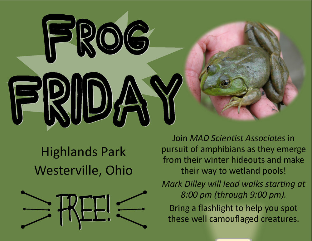 MAD-FrogFriday.jpg
