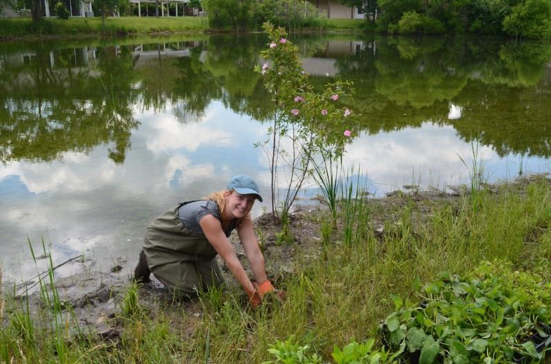Kendal Planting.JPG